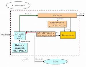 Ecología de los Ecosistemas: Figuras