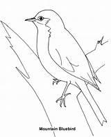 Coloring Bluebird Template Mountain Eastern Sketch sketch template