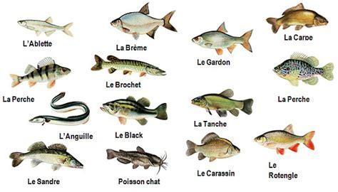 poissons de vend 233 e gite de peche