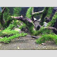 Spiky Moss (xl Wood) Aquarium Aquat (end 10132017 515 Pm
