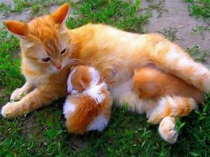 orange colored cat with kittens - Daily Picks and Flicks