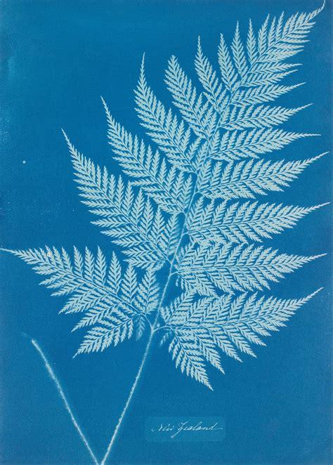 biography  century pioneer  cyanotype photography