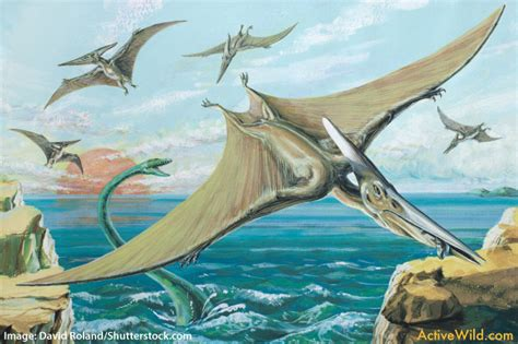 Pterodactylus Facts For Kids, Students & Adults