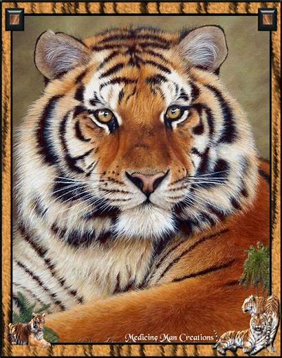 Tigre Tiger Animaux Siberian Le Du Sauvages