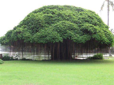 types of trees los libros resumidos de resumelibros tk
