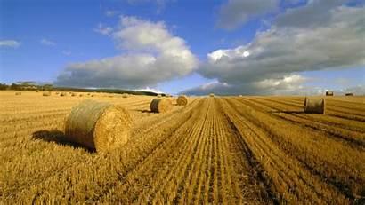 Harvest Desktop