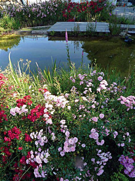 Der Bienenfreundliche Garten by Bienenfreundliche G 228 Rten Helfen Beim Artenschutz Produkte