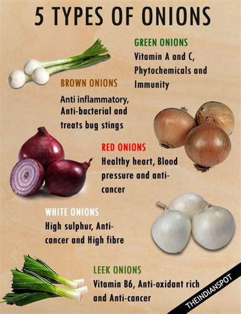 types of onions 17 best images about recipes on pinterest dog biscuits bacon dog and homemade