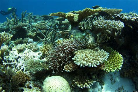 remote coral reefs   scott reef  recover