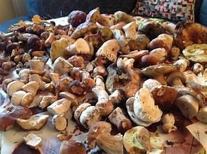 Maden Im Müll : pilzticker sachsen 34 funde vom ~ Markanthonyermac.com Haus und Dekorationen