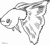 Guppy Coloring Fancy Printable Fish Pages Own sketch template