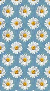 Daisy Wallpaper ! #wallpaper #background | Wallpaper ...