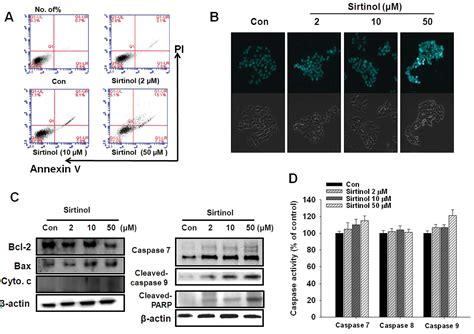 sirtinol  class iii hdac inhibitor induces apoptotic