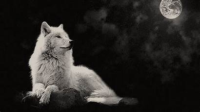 Wolf Desktop Arctic Night Background Moon Backgrounds