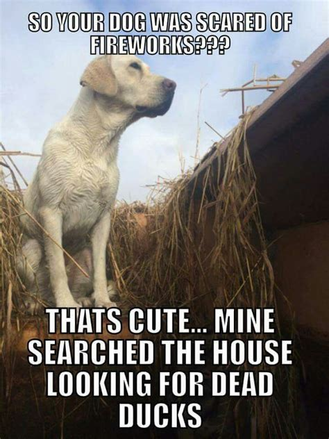 Duck Hunting Memes - these duck and goose hunting memes are almost fowl