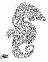 Seahorse Coloring Sheets Printable Generally Allow Marine Theme Child Children Come sketch template