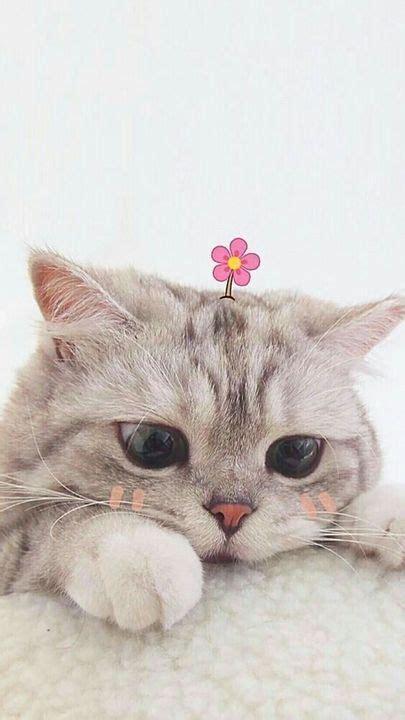 fondos de pantalla aesthetic kucing cantik gambar