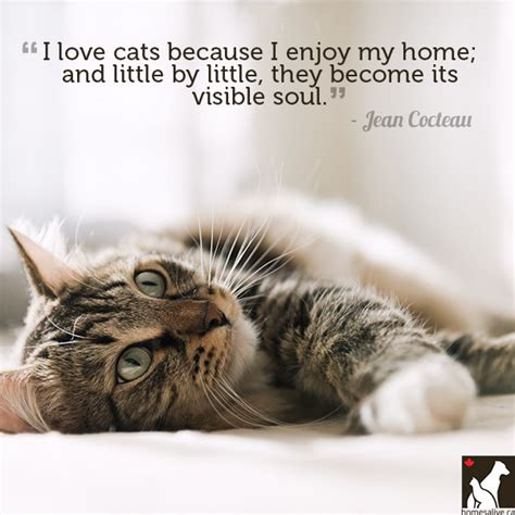 11 Quotes For The Love Of Dog Or Cat