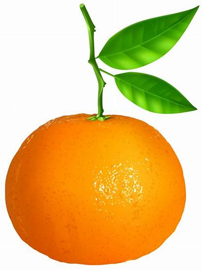 Tangerine Clipart Clementine Transparent Clip Fruit Clipground