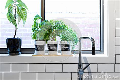 Contemporary Window Sill by Pots Of Herbs On Contemporary Kitchen Window Sill Stock