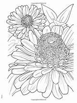 Zinnia Drawing Flower Coloring Flowers Zinnias Haven Creative Getdrawings Books Bloom sketch template