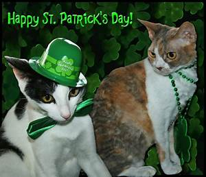 Happy St Patrick's Day from The Cat's Meow - Catster