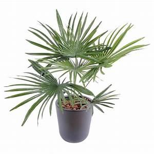 Fausse Plante Verte : palmier baby artificiel ~ Teatrodelosmanantiales.com Idées de Décoration