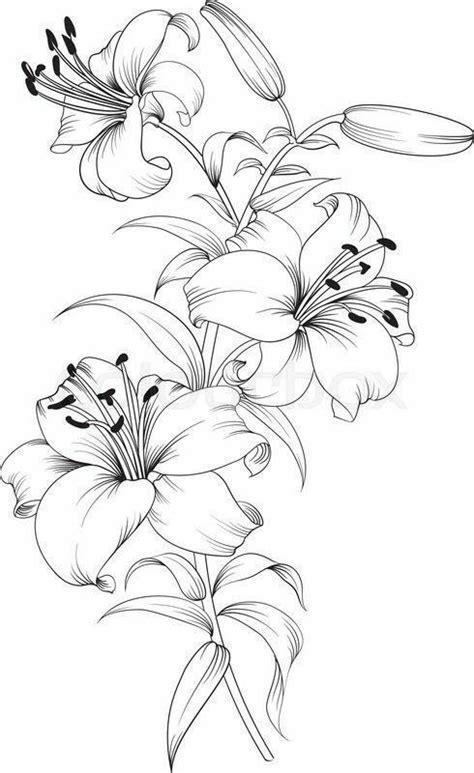 tiger lilies stargazer lilies print color art