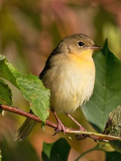 bird friendly coffee takes flight in md southern