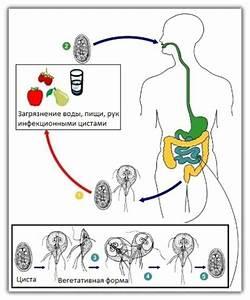 Кора осины лечение аденомы отзывы