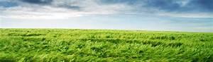 Grass Background - Lawn Background - Grassfields