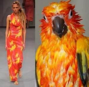 Fashion Bird Erfahrungen : mother nature inspired designs clothing everything fusion ~ Markanthonyermac.com Haus und Dekorationen
