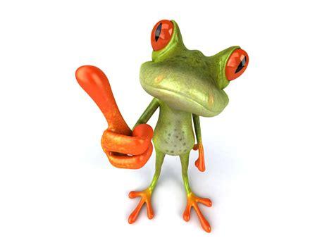 funny frog   android wallpaper wallpaperlepi