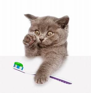 Dents Qui Se Déchaussent Photos : est il n cessaire d 39 entretenir les dents de son chat ~ Medecine-chirurgie-esthetiques.com Avis de Voitures