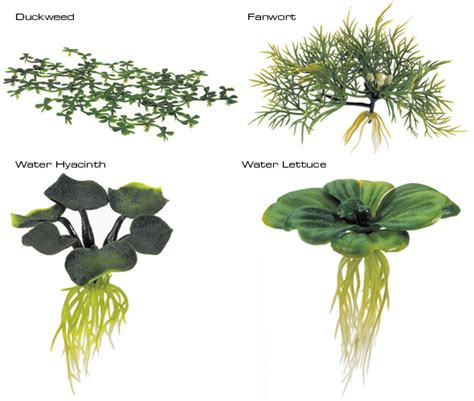 water plants ways to attract aquatic wildlife to your garden pond house and gardening addicts