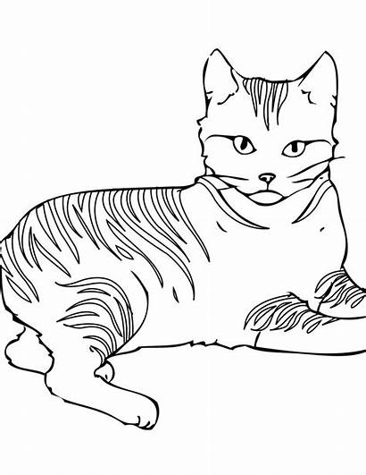 Coloring Cat Pages Warrior Printable