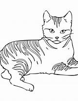 Coloring Cat Pages Warrior Printable sketch template