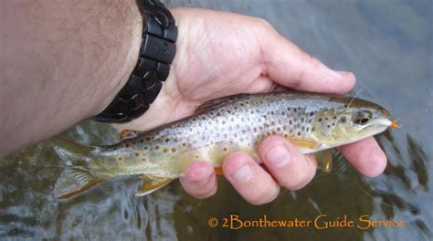 2Bonthewater Guide Service - 2011 Apologizing for the mis ...