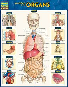 Anatomy Of The Organs  9781423234630