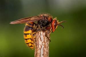 Eco Care Pest Management