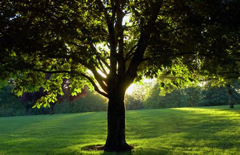 11 Best Shade Producing Trees To Plant  Procom Blog