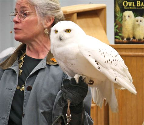 picture female person holds snowy owl bird