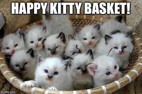 Happy Kitten Meme - happy kitty basket imgflip