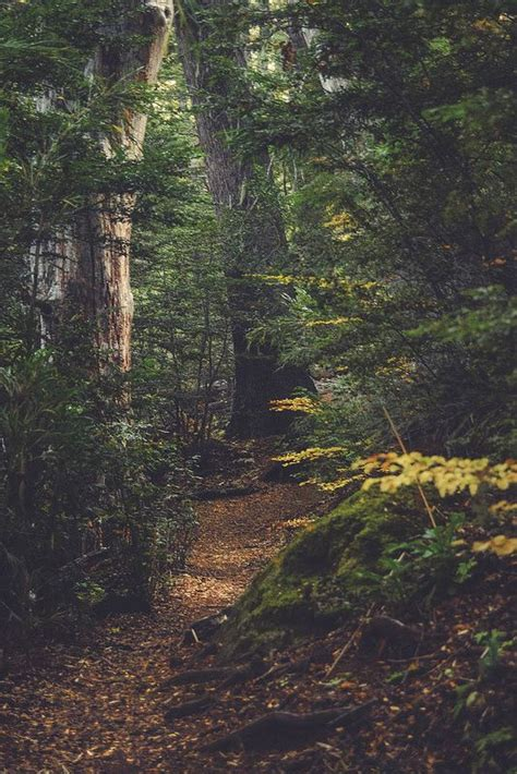 (13) Tumblr GORGEOUSO in 2019 Forest photography