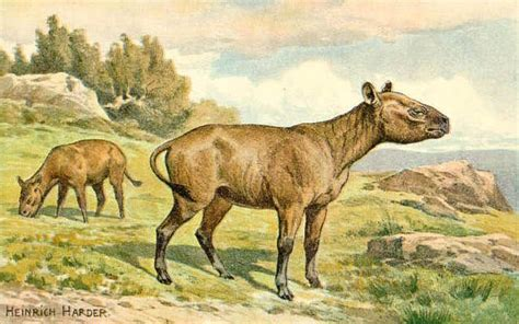 prehistoric animals wikipedia mammals commons animales horse extinct megafauna cenozoic wikimedia horses cenozoico ancient era helepolis giant rinocerontes similar encantada