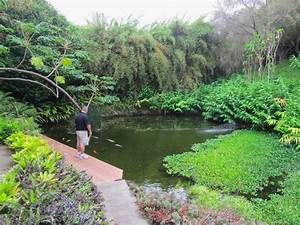 Cheesehead gardening kula botanical gardens of maui for Botanical gardens maui