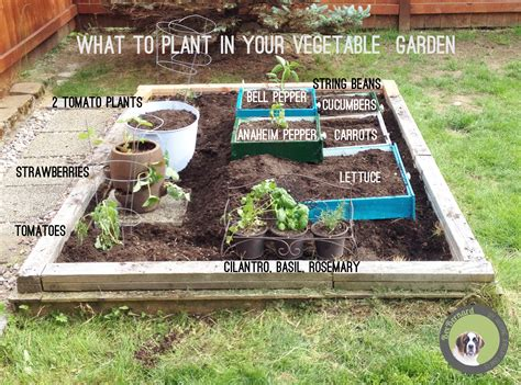 what to plant in your garden finished side view vegetable