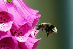Bienen Und Wespen : bienen und wespen ~ Whattoseeinmadrid.com Haus und Dekorationen