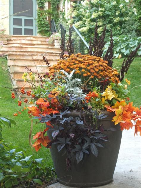Fall Container Garden Need To Swap Out Begonias And Put