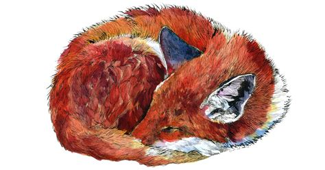 draw animal watercolors inspired   time spent living